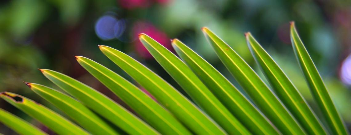 Original photos from around Guam daily